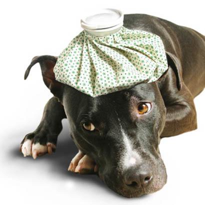 Dog health symptoms 4